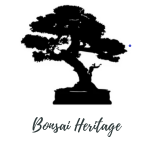 Best Bonsai Trees in UK